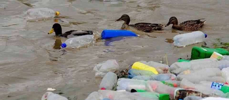 Patos rodeados de plástico